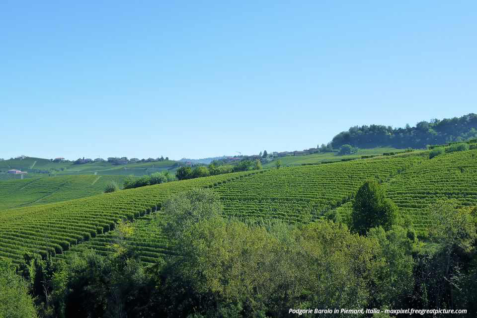 agriculture-vines-barolo-vineyards-italy-piemonte-458231